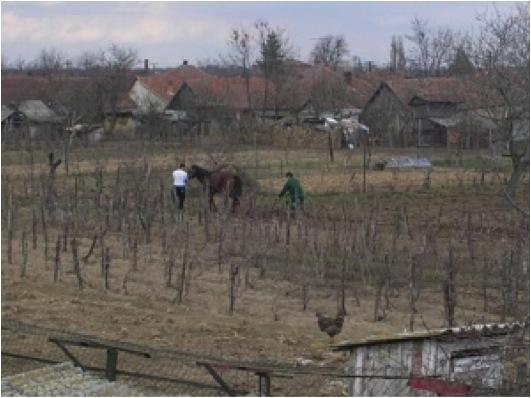 Project_Valea_Lui_Mihai_image047